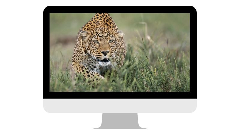 fotografia-fauna-salvaje-liebana-2