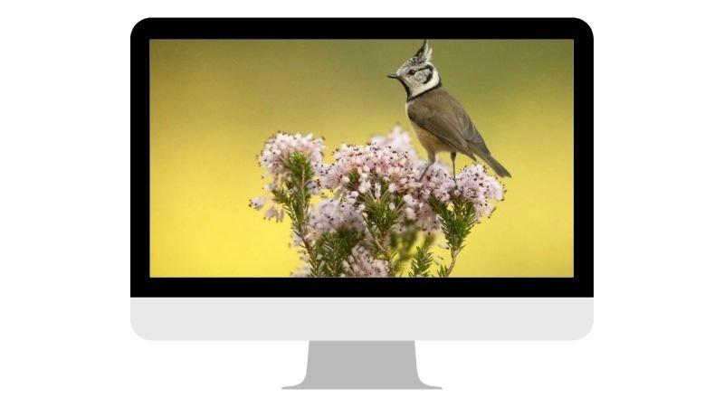 webinar-fotografia-hides-benito-2