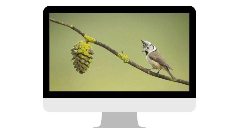 webinar-fotografia-hides-benito-4