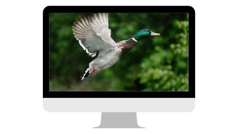 webinar-fotografia-hides-benito-6